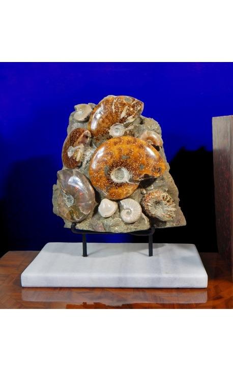 Grand bloc d'ammonites sur support en marbre blanc (Bloc 1)