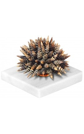 "Paperweight with ""Batillaria"" shells and white marble"