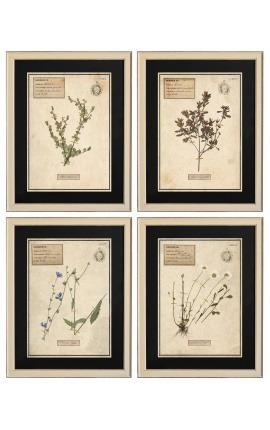 Set de 4 herbiers avec cadre beige (Serie 2)