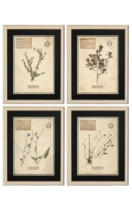 Set of 4 herbarium with beige frame (Serie 2)