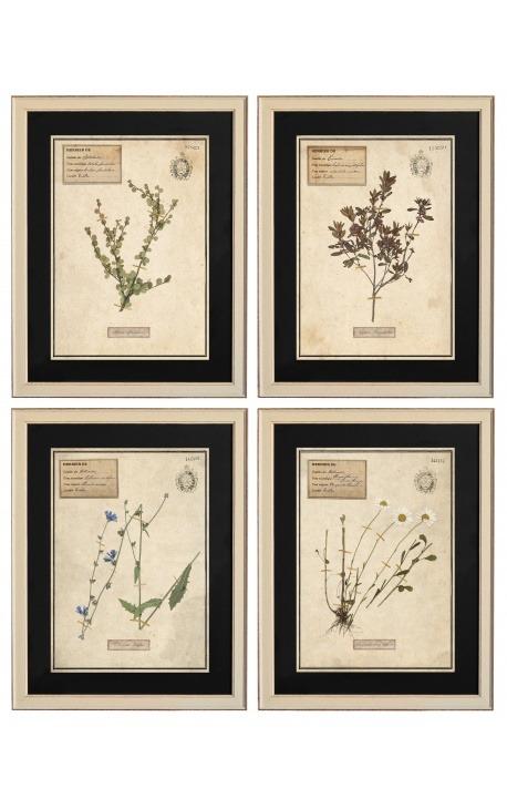 Set of 4 herbarium with beige frame (Serie 2)