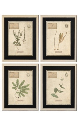 Set of 4 herbarium with beige frame (Serie 3)