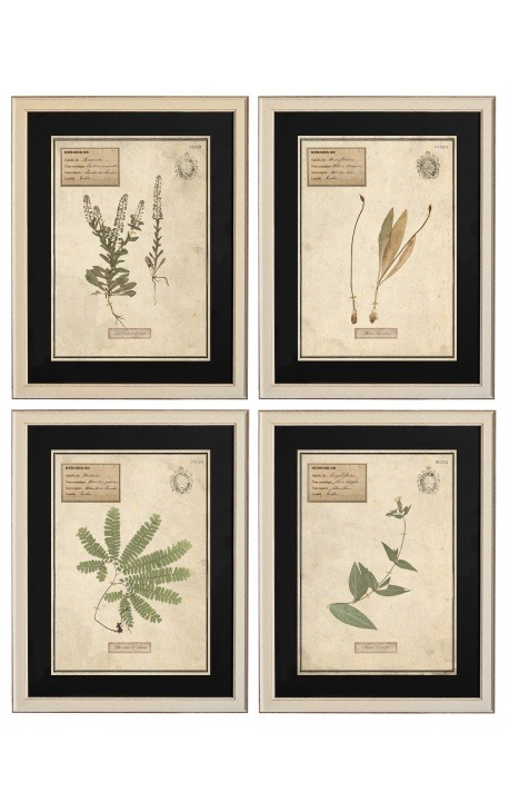Set of 4 herbarium with beige frame (Serie 3)