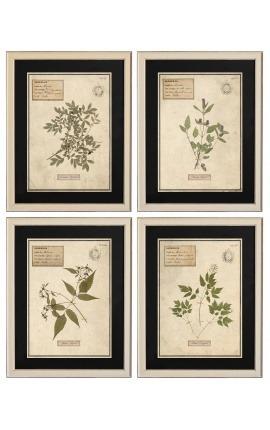Set de 4 herbiers avec cadre beige (Serie 4)