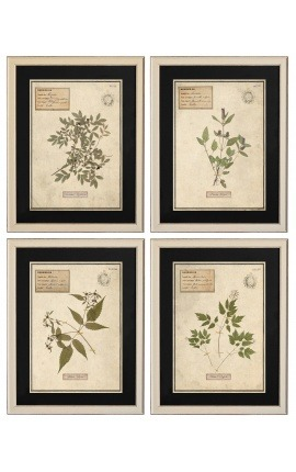 Set of 4 herbarium with beige frame (Serie 4)