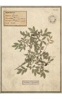 Set of 4 herbarium with beige frame (Serie 4)