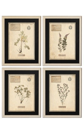 Set of 4 herbarium with beige frame (Serie 1)