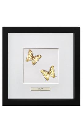 """Cadre décoratif avec papillons """"Cyrestis Camillus"""""""