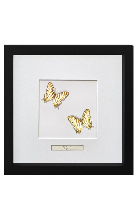 """Decorative frame with two butterflies """"Cyrestis Camillus"""""""