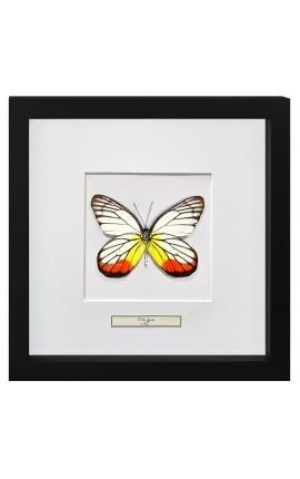 """Cadre décoratif avec papillon """"Delias Hyparete"""""""