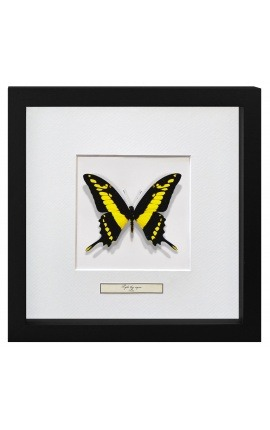 "Decorative frame with a butterfly ""Papilio Thoas Cinyras"""