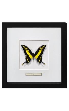 """Cadre décoratif avec papillon """"Papilio Thoas Cinyras"""""""