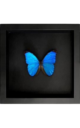 """Cadre décoratif sur fond noir avec papillon """"Morpho Menelaus"""""""