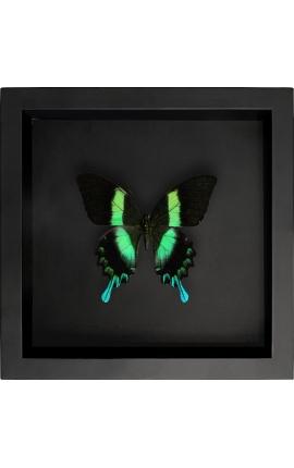 """Cadre décoratif sur fond noir avec papillon """"Papilio Blumei"""""""
