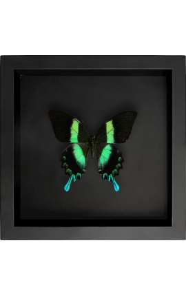 """Decorative frame on black background with butterfly """"Papilio Blumei"""""""