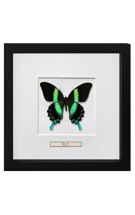 """Decorative frame with a butterfly """"Papilio Blunei"""""""