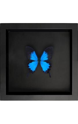 """Cadre décoratif sur fond noir avec papillon """"Ulysses Ulysses"""""""