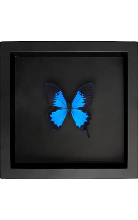 "Decorative frame on black background with butterfly ""Ulysses Ulysses"""