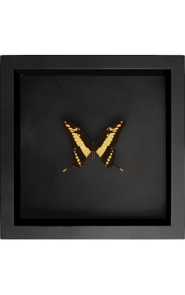 """Decorative frame on black background with butterfly """"Papilio Thoas Cinyras"""""""