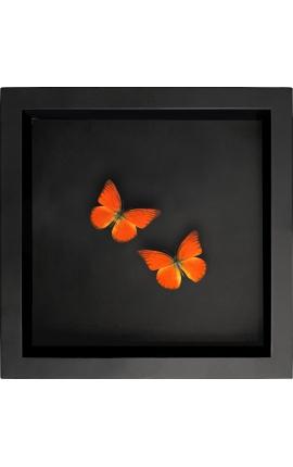 """Cadre décoratif sur fond noir avec papillons """"Appias Nero"""""""