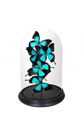 "Papillons (6) ""Ulysses Ulysses"" sous globe en verre"