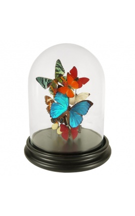 Papillons avec une dizaine de variétés de papillons sous globe en verre