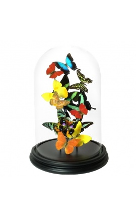Papillons exotiques avec plusieurs variétés de papillons sous dôme en verre (S)