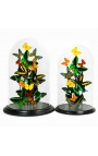 Exotic butterflies with several varieties of butterflies under glass dome (XL)