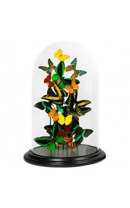 Papillons exotiques avec plusieurs variétés de papillons sous dôme en verre (XL)