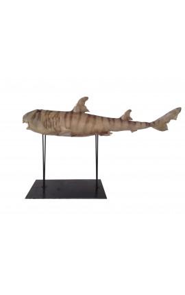 Requin Bulldog naturalisé sur support métallique
