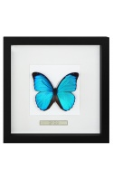 Frames with butterflies and insects